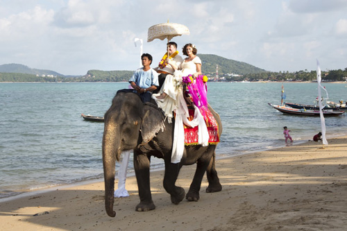 Bride arriving at a Samui wedding ceremony on the back of elephant